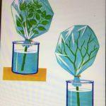La traspirazione delle piante
