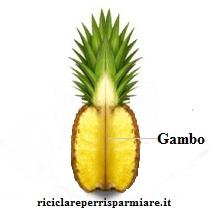 Parti dell'Ananas utili per la preparazione dell'Estratto d'Ananas