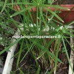 Vasi di polistirolo per le piante