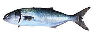 Dado di pesce