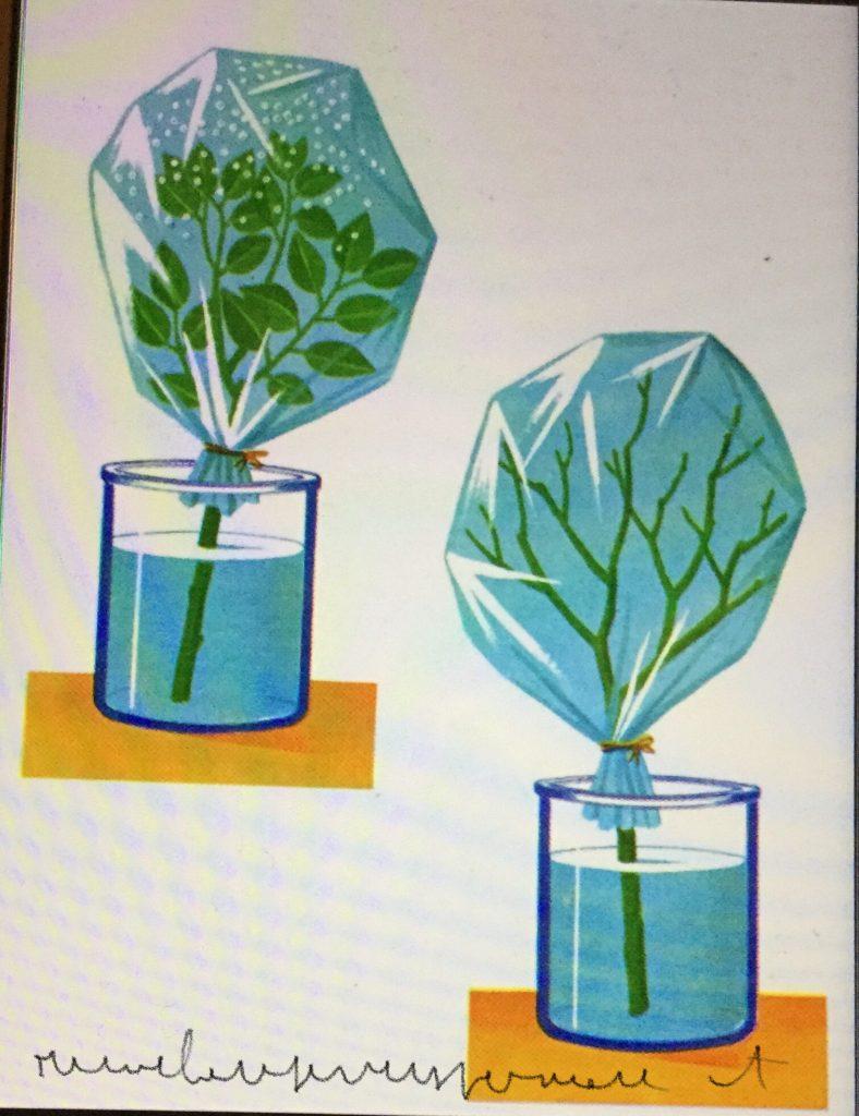 Traspirazione delle piante